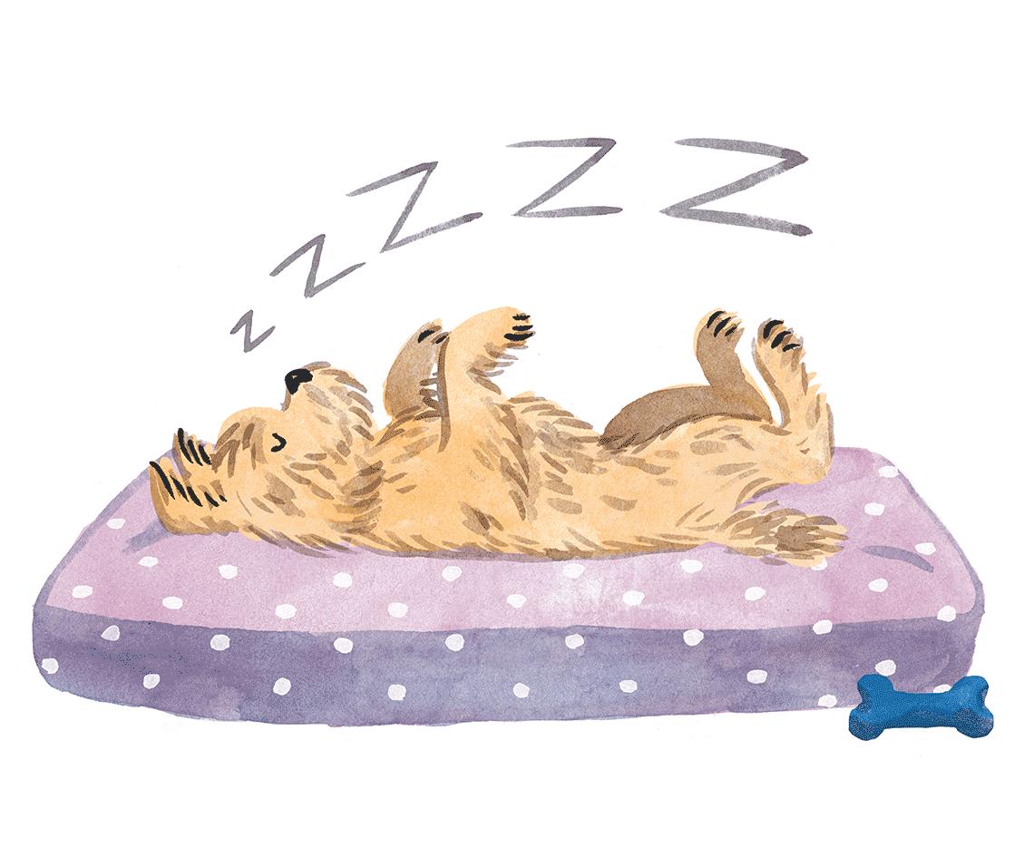 barkers_sleeping_dog1140px