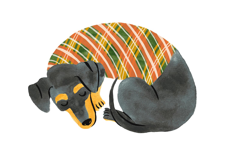 barkers_dachshund_sleeping1540px